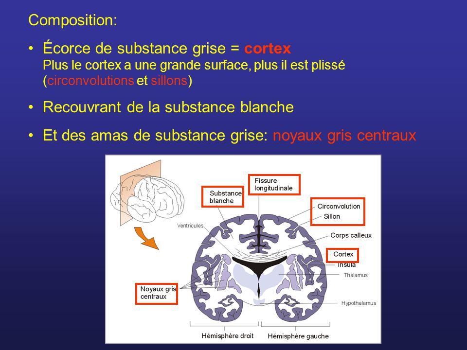 Composition: Écorce de substance grise = cortex Plus le cortex a une grande surface, plus il est plissé (circonvolutions et sillons) Recouvrant de la substance blanche Et des amas de substance grise: noyaux gris centraux