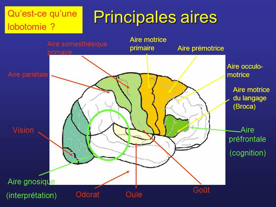 Principales aires Aire somesthésique primaire Aire pariétale Vision Ouïe Goût Odorat Aire motrice primaire Aire prémotrice Aire motrice du langage (Br