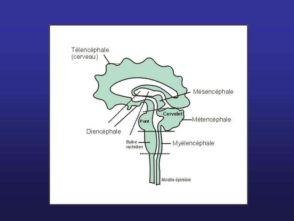 Système limbique Touche le diencéphale, les noyaux amygdaliens, le cortex cérébral.