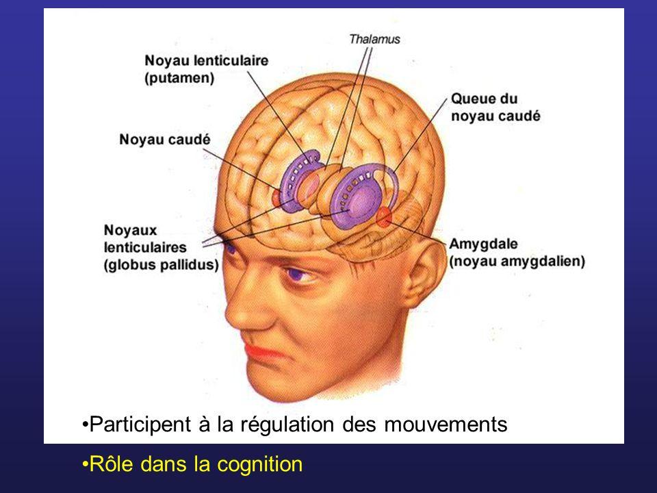 Participent à la régulation des mouvements Rôle dans la cognition