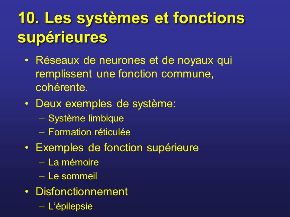 Réseaux de neurones et de noyaux qui remplissent une fonction commune, cohérente. Deux exemples de système: –Système limbique –Formation réticulée Exe
