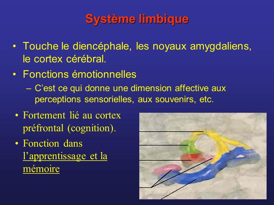 Système limbique Touche le diencéphale, les noyaux amygdaliens, le cortex cérébral. Fonctions émotionnelles –Cest ce qui donne une dimension affective