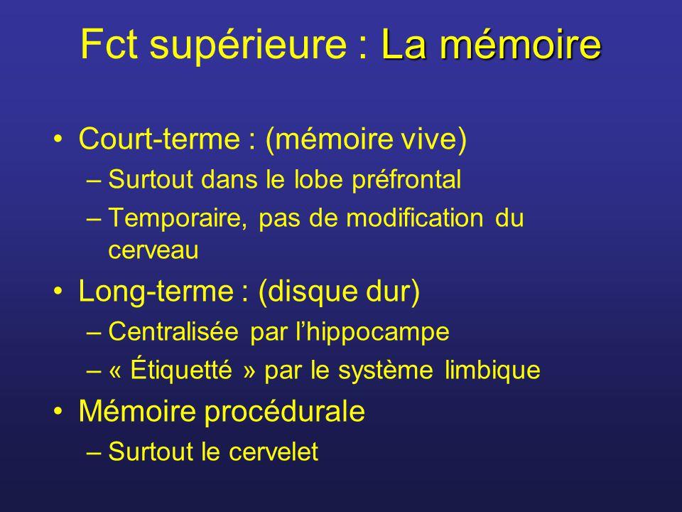 La mémoire Fct supérieure : La mémoire Court-terme : (mémoire vive) –Surtout dans le lobe préfrontal –Temporaire, pas de modification du cerveau Long-