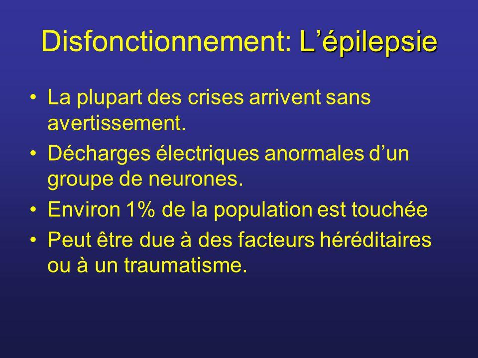 Lépilepsie Disfonctionnement: Lépilepsie La plupart des crises arrivent sans avertissement. Décharges électriques anormales dun groupe de neurones. En