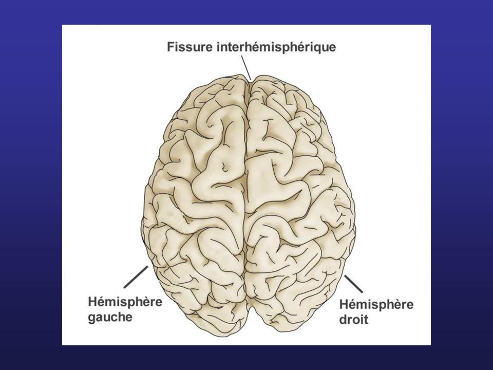 Télencéphale Mésencéphale Pont (protubérance) Bulbe rachidien = Tronc cérébral CerveletDiencéphale