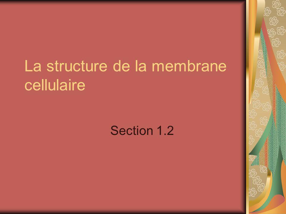 Pourquoi est-ce quil y a une membrane cellulaire? Quelle est son but?