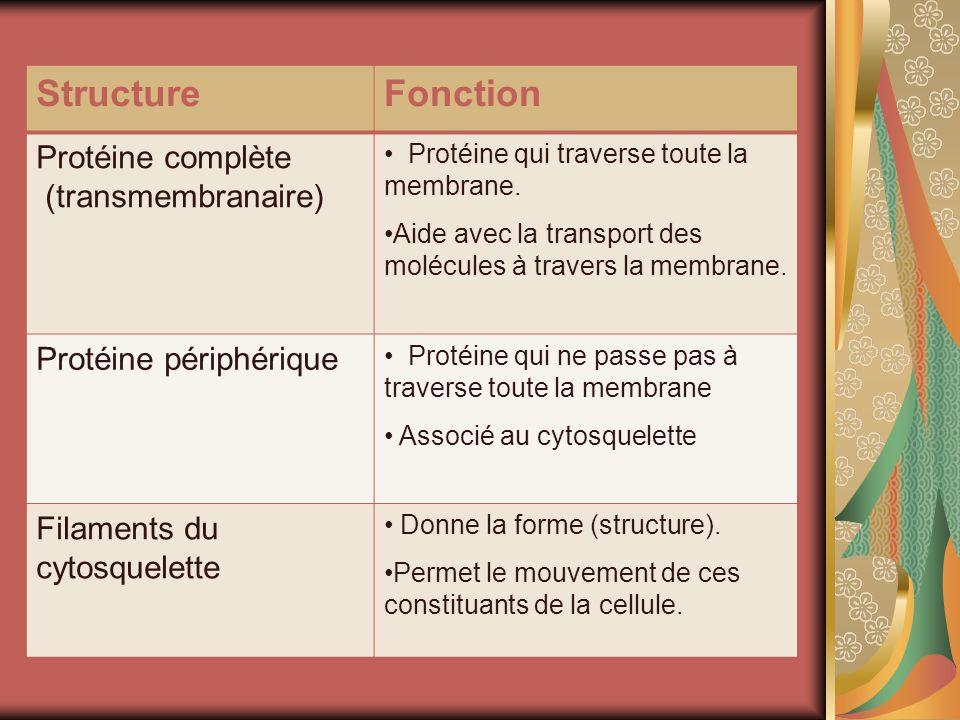 StructureFonction Protéine complète (transmembranaire) Protéine qui traverse toute la membrane. Aide avec la transport des molécules à travers la memb