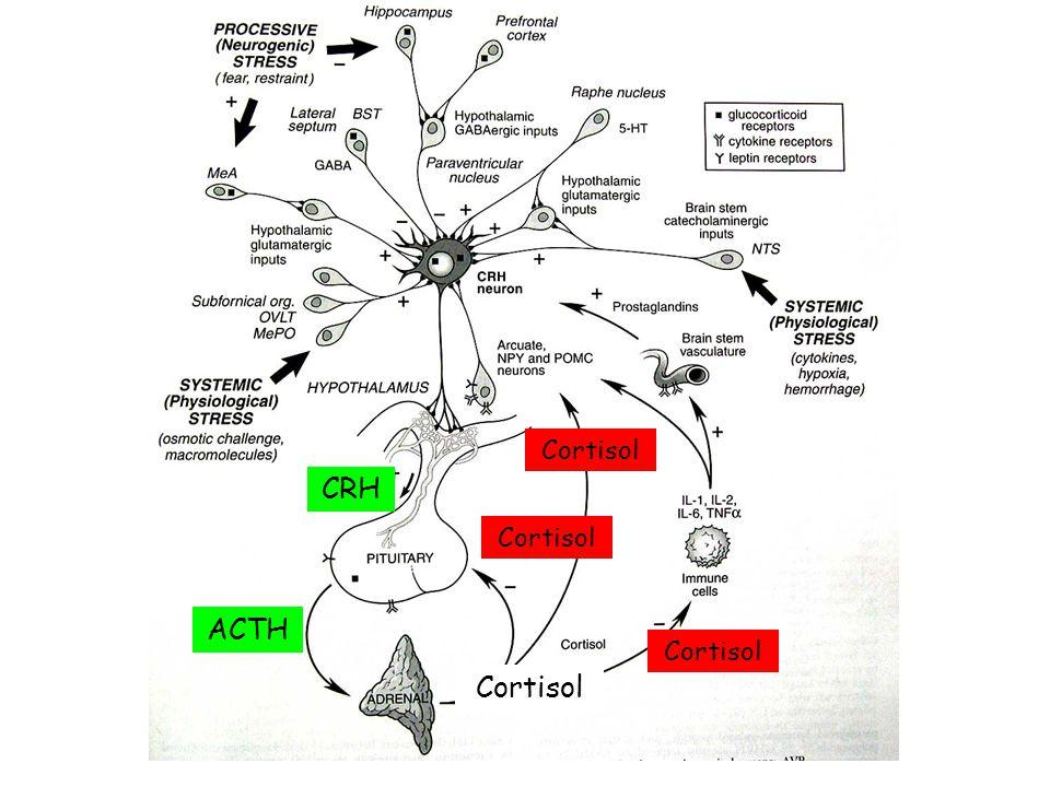 CRH ACTH Cortisol