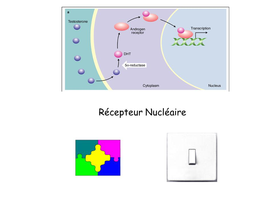 Récepteur Nucléaire