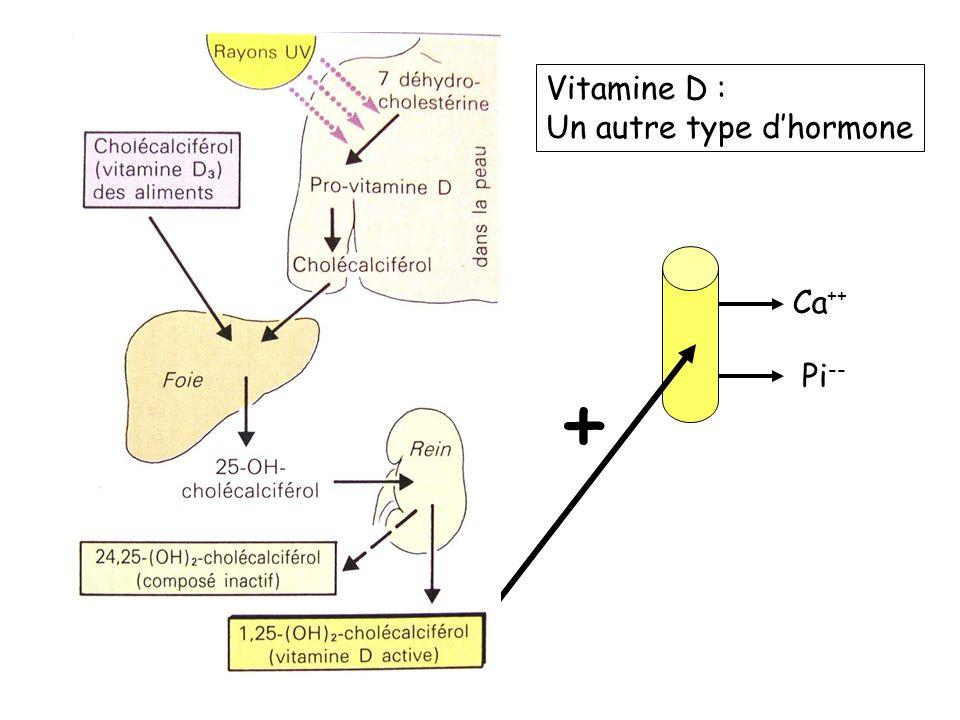 Ca ++ Pi -- + Vitamine D : Un autre type dhormone