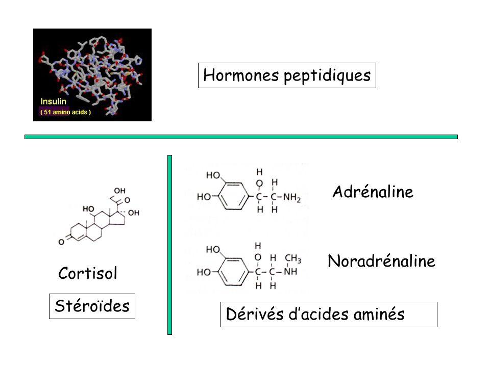 Hormones peptidiques Adrénaline Cortisol Noradrénaline Stéroïdes Dérivés dacides aminés
