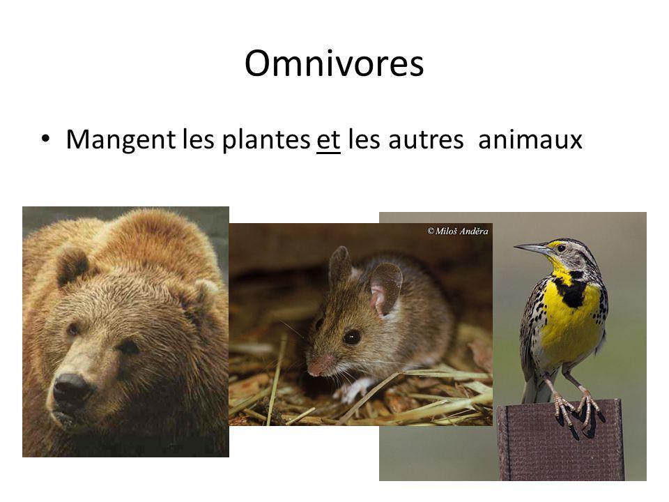 Omnivores Mangent les plantes et les autres animaux 16