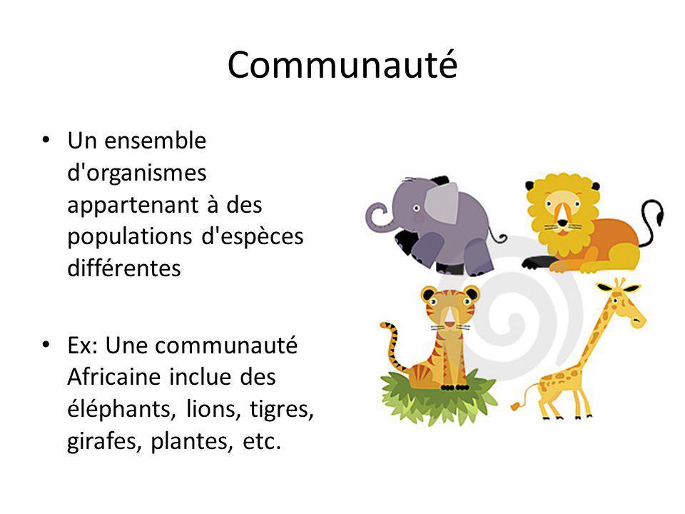 Communauté Un ensemble d organismes appartenant à des populations d espèces différentes Ex: Une communauté Africaine inclue des éléphants, lions, tigres, girafes, plantes, etc.