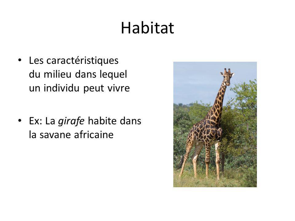 Habitat Les caractéristiques du milieu dans lequel un individu peut vivre Ex: La girafe habite dans la savane africaine