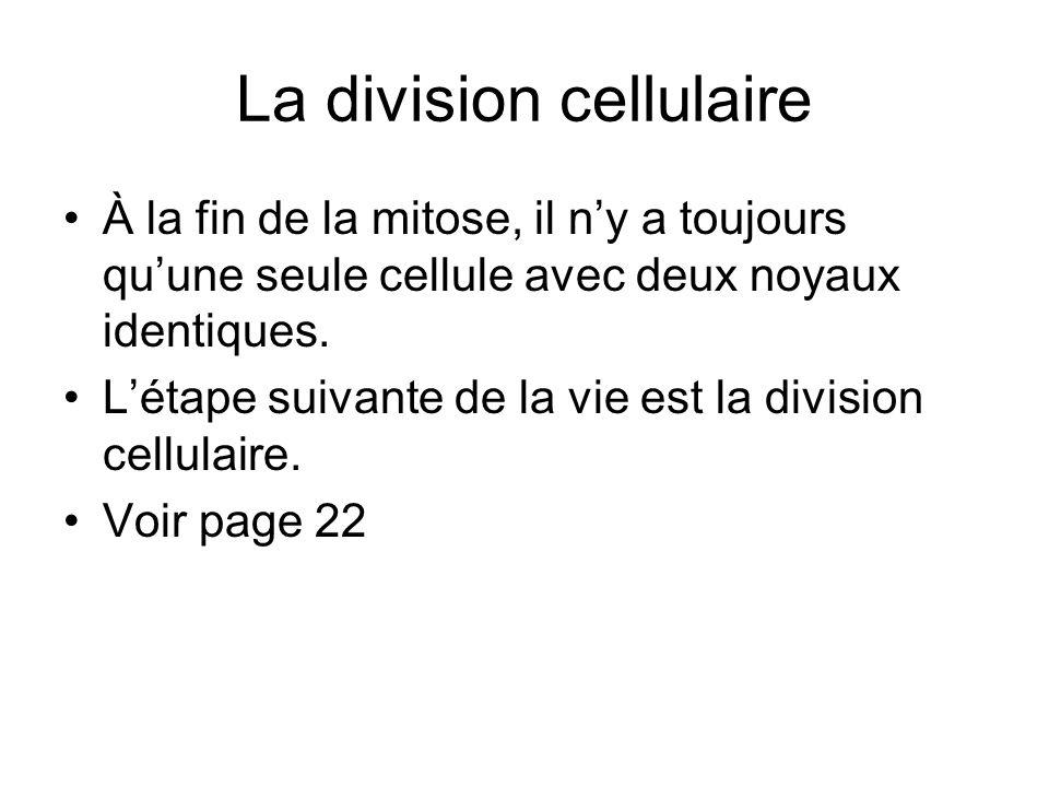 La division cellulaire À la fin de la mitose, il ny a toujours quune seule cellule avec deux noyaux identiques. Létape suivante de la vie est la divis