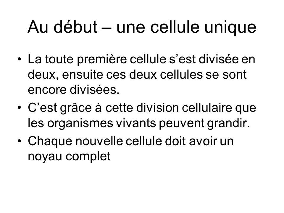 Au début – une cellule unique La toute première cellule sest divisée en deux, ensuite ces deux cellules se sont encore divisées. Cest grâce à cette di