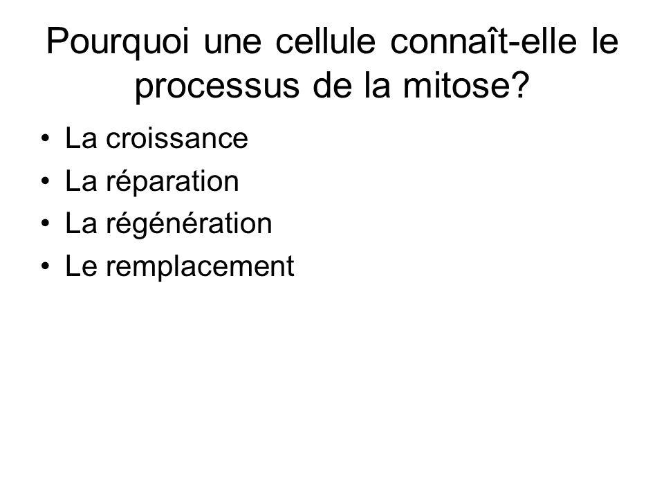 Pourquoi une cellule connaît-elle le processus de la mitose? La croissance La réparation La régénération Le remplacement