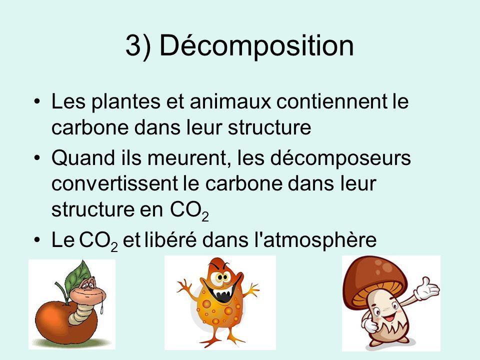 3) Décomposition Les plantes et animaux contiennent le carbone dans leur structure Quand ils meurent, les décomposeurs convertissent le carbone dans l