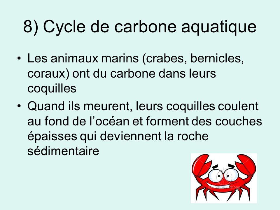 8) Cycle de carbone aquatique Les animaux marins (crabes, bernicles, coraux) ont du carbone dans leurs coquilles Quand ils meurent, leurs coquilles coulent au fond de locéan et forment des couches épaisses qui deviennent la roche sédimentaire