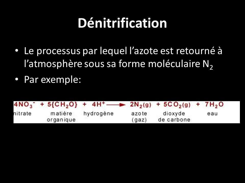 Dénitrification Le processus par lequel lazote est retourné à latmosphère sous sa forme moléculaire N 2 Par exemple:
