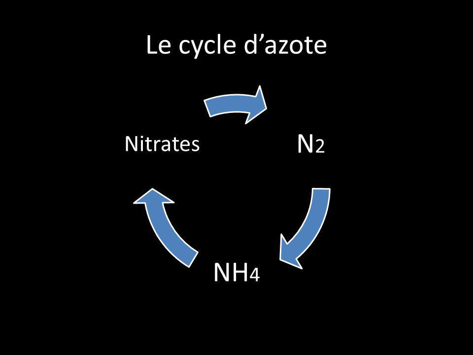 Le cycle dazote N2N2 NH 4 Nitrates