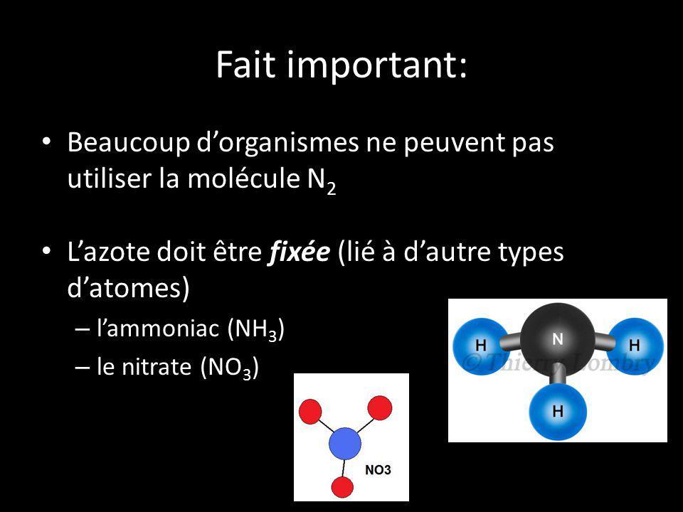 Fait important: Beaucoup dorganismes ne peuvent pas utiliser la molécule N 2 Lazote doit être fixée (lié à dautre types datomes) – lammoniac (NH 3 ) –