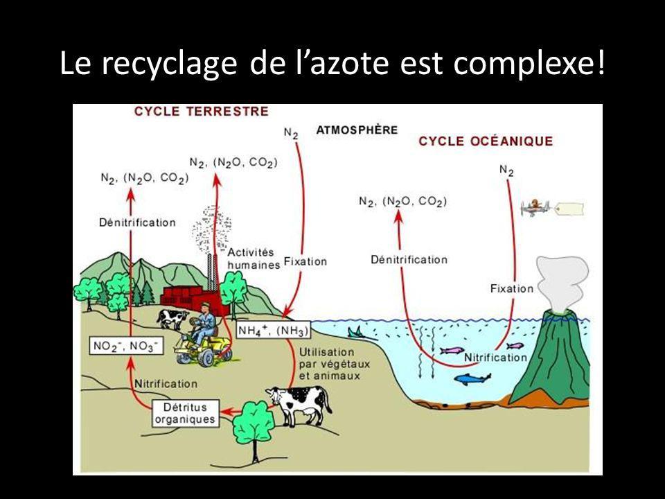 Le recyclage de lazote est complexe!