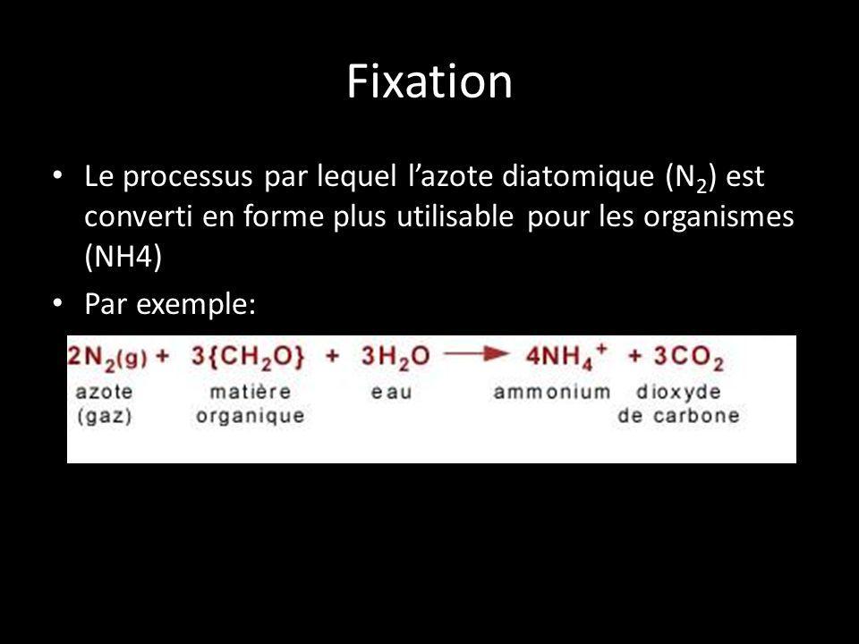 Fixation Le processus par lequel lazote diatomique (N 2 ) est converti en forme plus utilisable pour les organismes (NH4) Par exemple:
