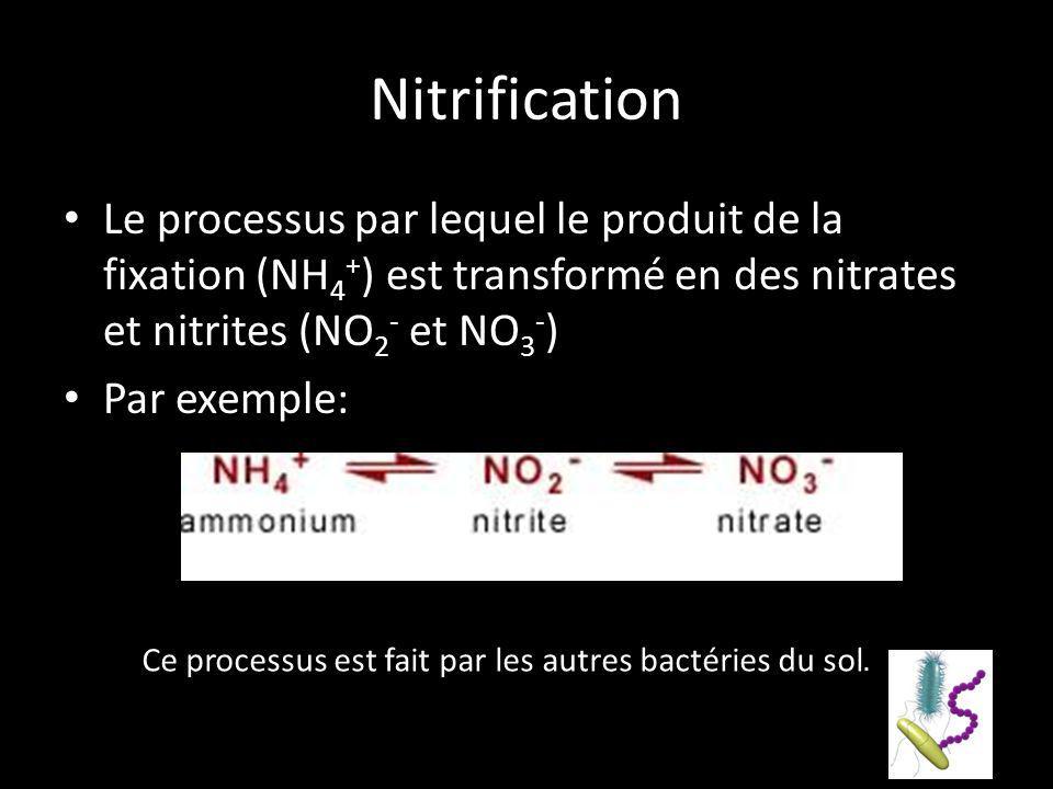 Nitrification Le processus par lequel le produit de la fixation (NH 4 + ) est transformé en des nitrates et nitrites (NO 2 - et NO 3 - ) Par exemple: