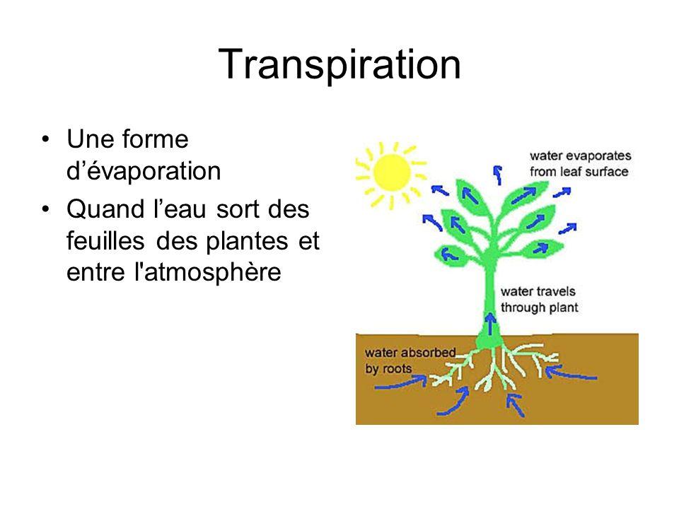 Transpiration Une forme dévaporation Quand leau sort des feuilles des plantes et entre l'atmosphère