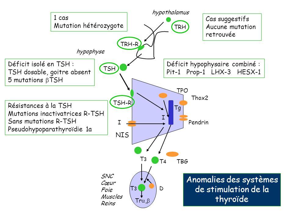 hypothalamus hypophyse TRH-R TRH TSH TSH-R IPendrin Thox2 TPO Tg I T4T4 T3T3 T3T3 D SNC Cœur Foie Muscles Reins TBG Tr, NIS Cas suggestifs Aucune muta
