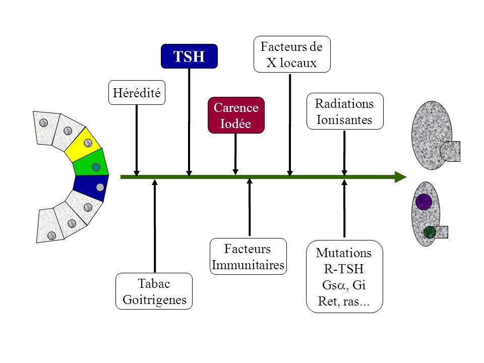 Hérédité TSH Facteurs de X locaux Carence Iodée Radiations Ionisantes Tabac Goitrigenes Mutations R-TSH Gs, Gi Ret, ras... Facteurs Immunitaires