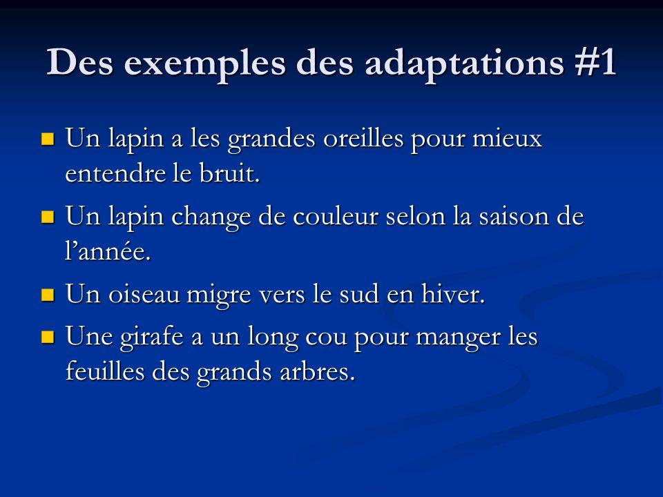 Des exemples des adaptations #1 Un lapin a les grandes oreilles pour mieux entendre le bruit.
