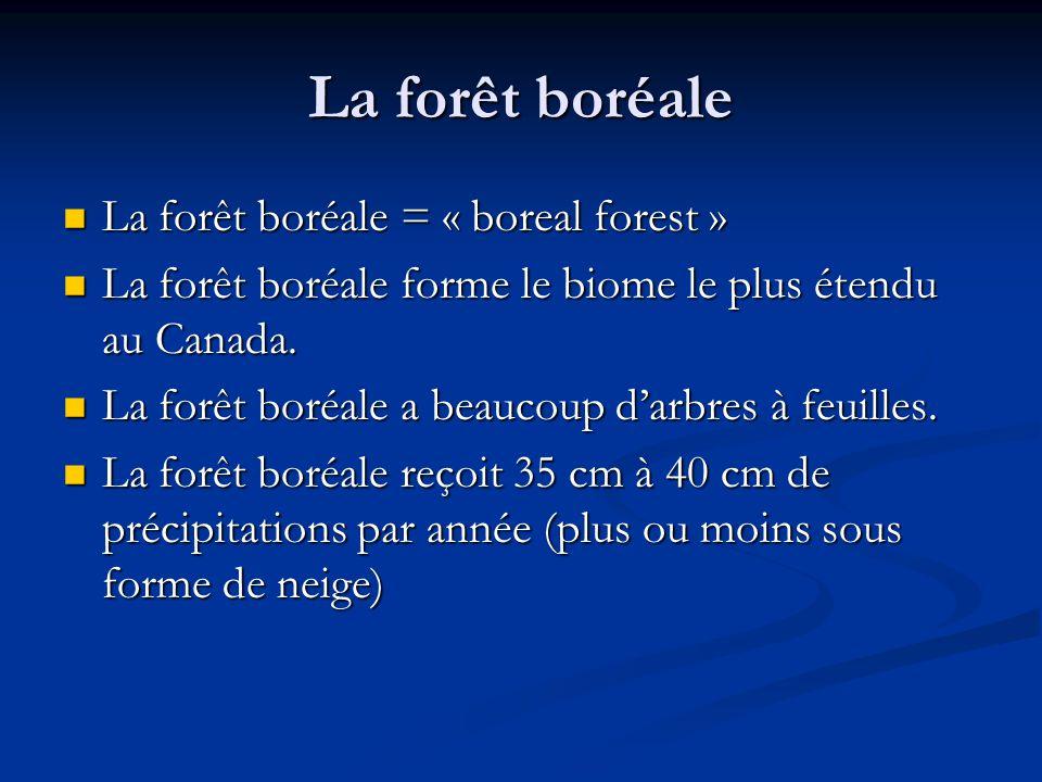 La forêt boréale La forêt boréale = « boreal forest » La forêt boréale = « boreal forest » La forêt boréale forme le biome le plus étendu au Canada.