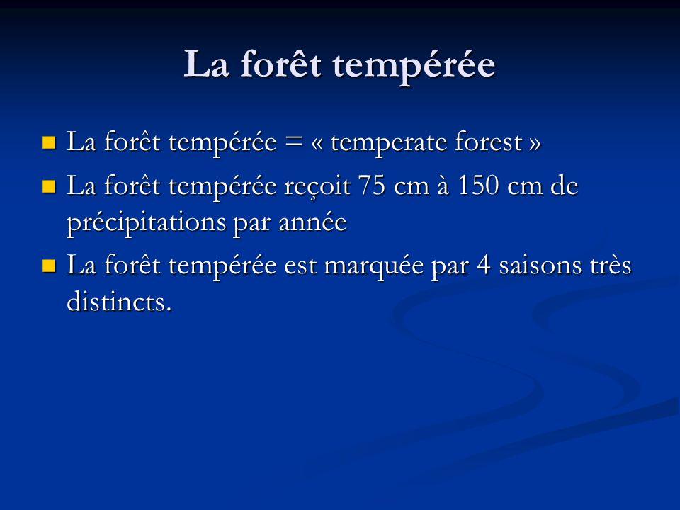 La forêt tempérée La forêt tempérée = « temperate forest » La forêt tempérée = « temperate forest » La forêt tempérée reçoit 75 cm à 150 cm de précipitations par année La forêt tempérée reçoit 75 cm à 150 cm de précipitations par année La forêt tempérée est marquée par 4 saisons très distincts.