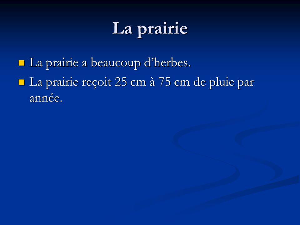 La prairie La prairie a beaucoup dherbes.La prairie a beaucoup dherbes.