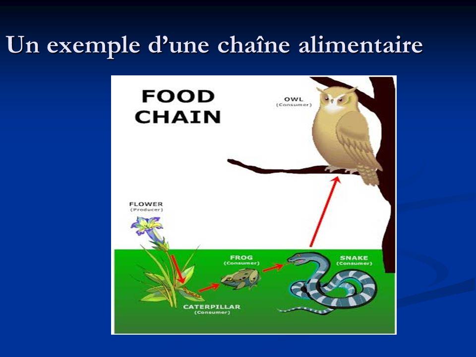 Un exemple dune chaîne alimentaire