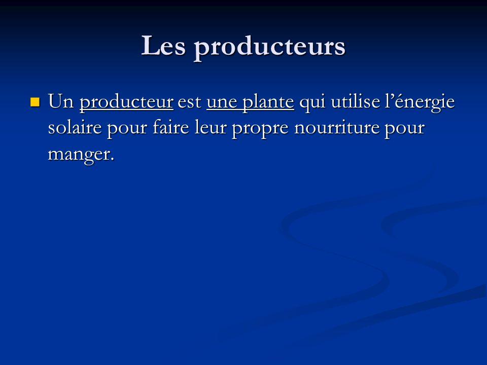 Les producteurs Un producteur est une plante qui utilise lénergie solaire pour faire leur propre nourriture pour manger.