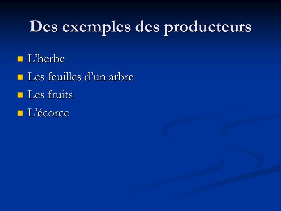 Des exemples des producteurs Lherbe Lherbe Les feuilles dun arbre Les feuilles dun arbre Les fruits Les fruits Lécorce Lécorce