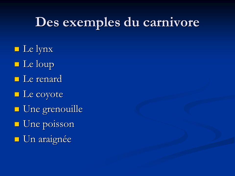 Des exemples du carnivore Le lynx Le lynx Le loup Le loup Le renard Le renard Le coyote Le coyote Une grenouille Une grenouille Une poisson Une poisson Un araignée Un araignée