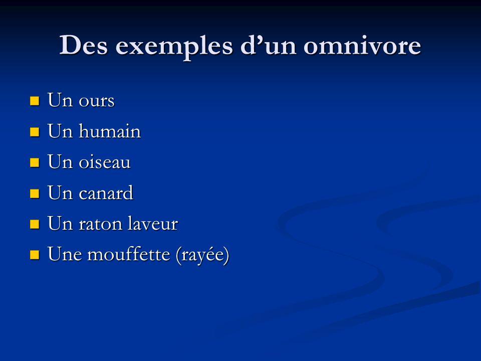 Des exemples dun omnivore Un ours Un ours Un humain Un humain Un oiseau Un oiseau Un canard Un canard Un raton laveur Un raton laveur Une mouffette (rayée) Une mouffette (rayée)