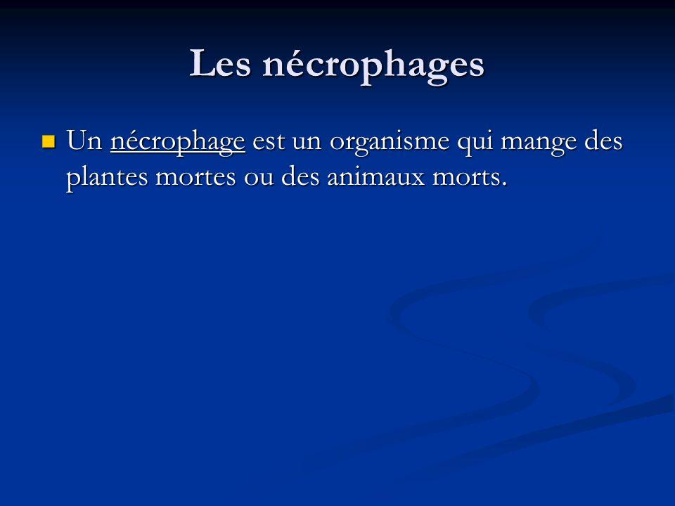 Les nécrophages Un nécrophage est un organisme qui mange des plantes mortes ou des animaux morts.