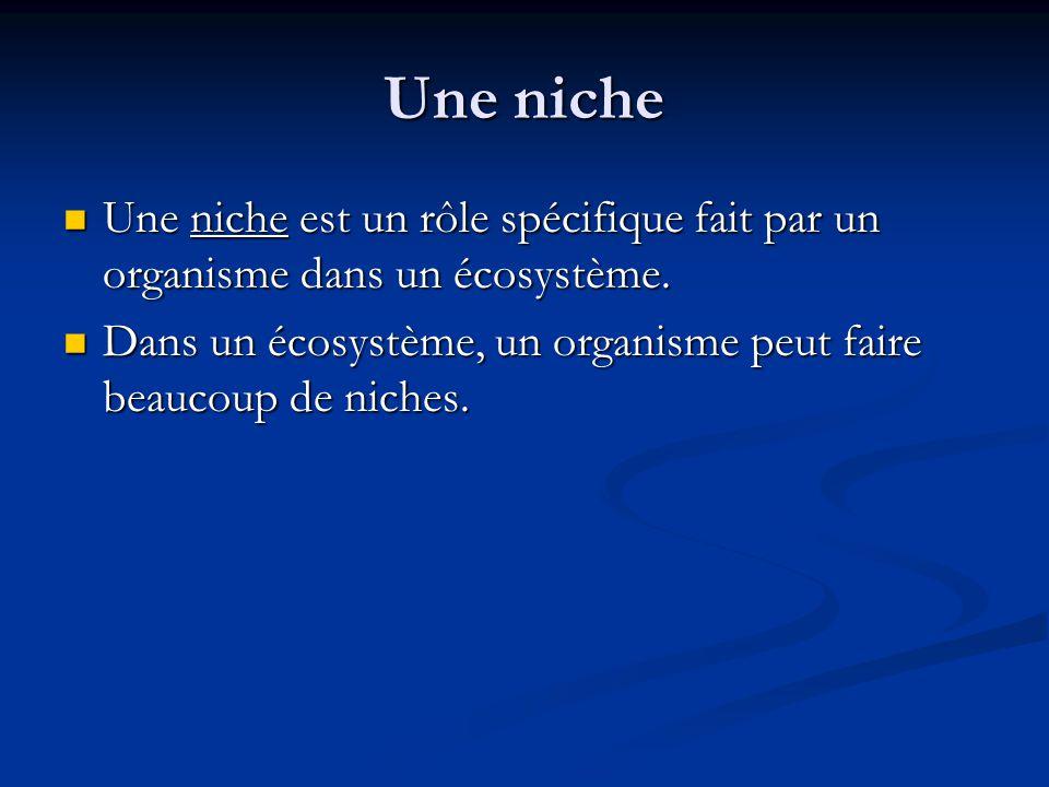 Une niche Une niche est un rôle spécifique fait par un organisme dans un écosystème.