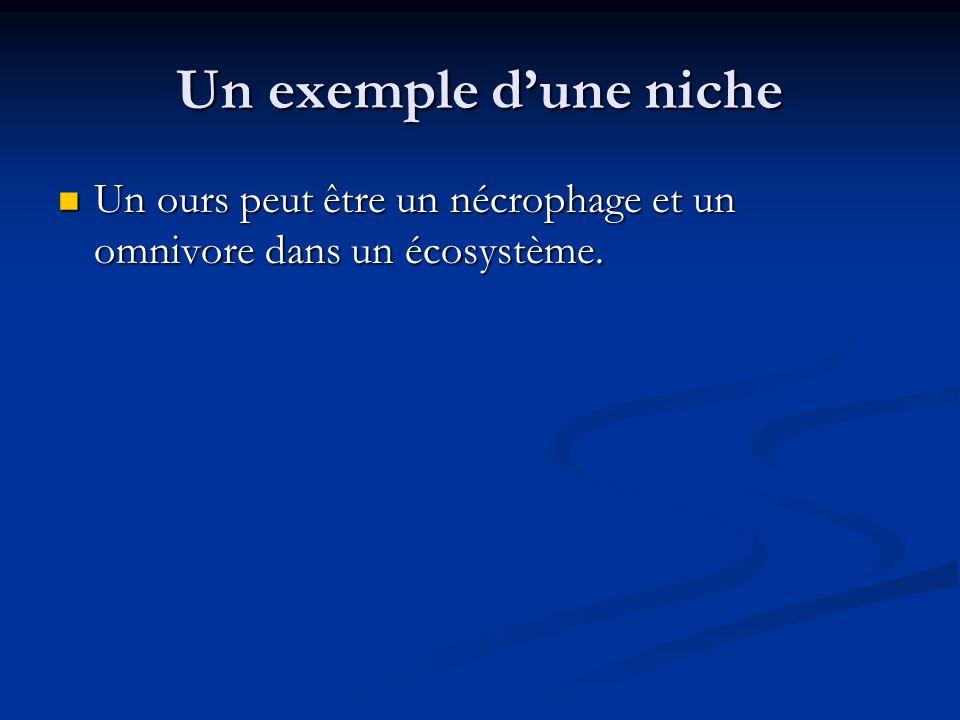 Un exemple dune niche Un ours peut être un nécrophage et un omnivore dans un écosystème.