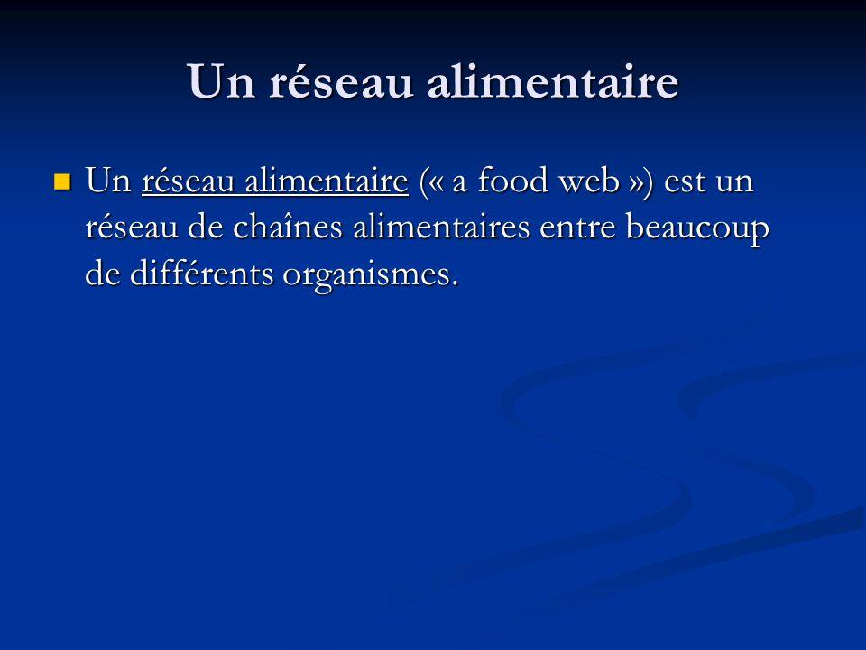 Un réseau alimentaire Un réseau alimentaire (« a food web ») est un réseau de chaînes alimentaires entre beaucoup de différents organismes.