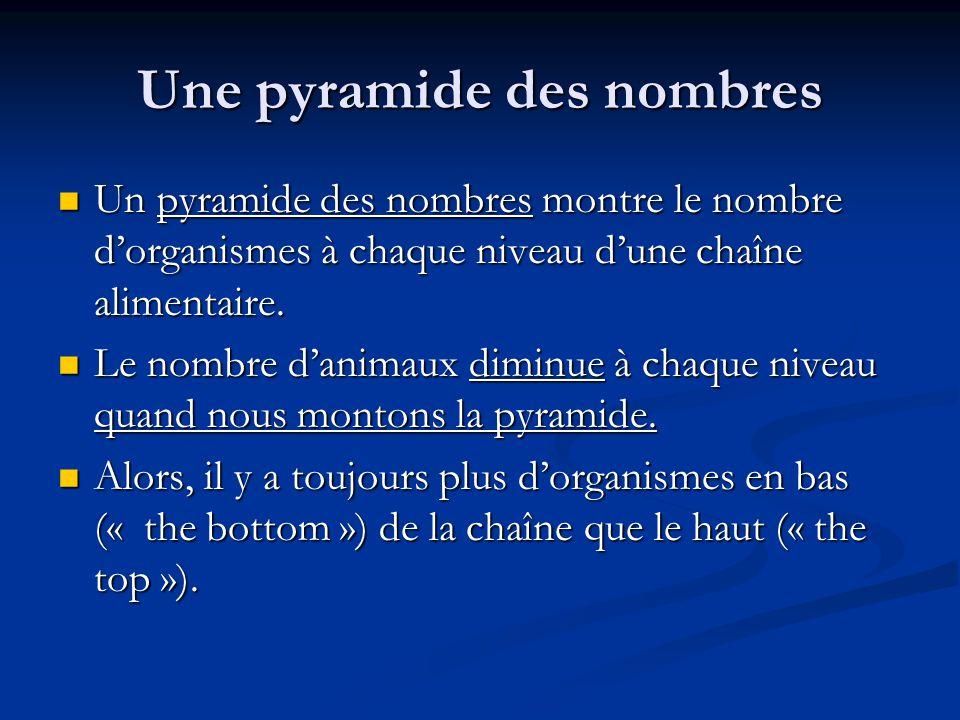 Une pyramide des nombres Un pyramide des nombres montre le nombre dorganismes à chaque niveau dune chaîne alimentaire.