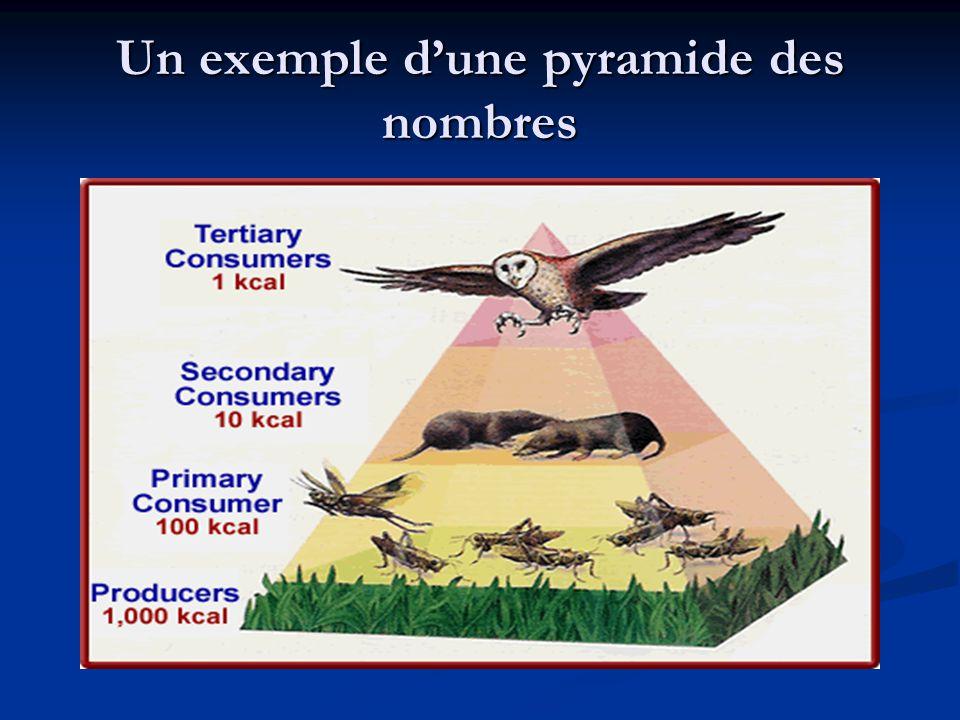 Un exemple dune pyramide des nombres
