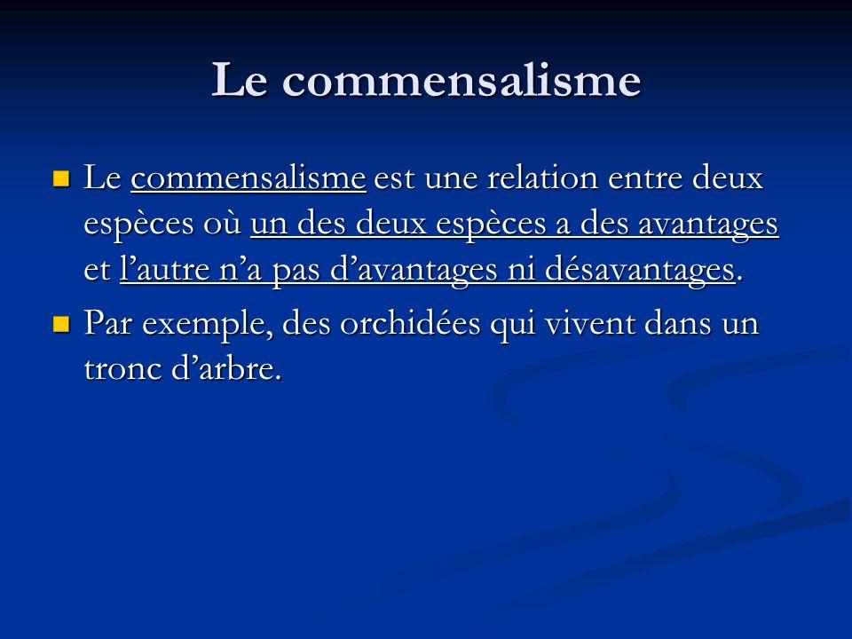 Le commensalisme Le commensalisme est une relation entre deux espèces où un des deux espèces a des avantages et lautre na pas davantages ni désavantages.