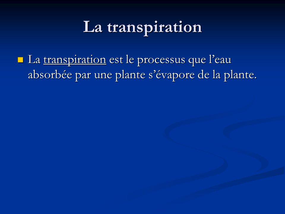 La transpiration La transpiration est le processus que leau absorbée par une plante sévapore de la plante.