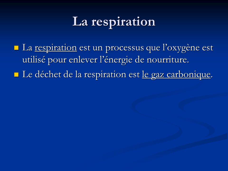 La respiration La respiration est un processus que loxygène est utilisé pour enlever lénergie de nourriture.